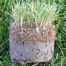 Fix bare spots by removing dead grass, loosening the soil and applying GreenView Lawn Repair.