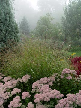 Ornamental grass & pink sedum