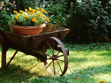 Flower pot in a wheelbarrow