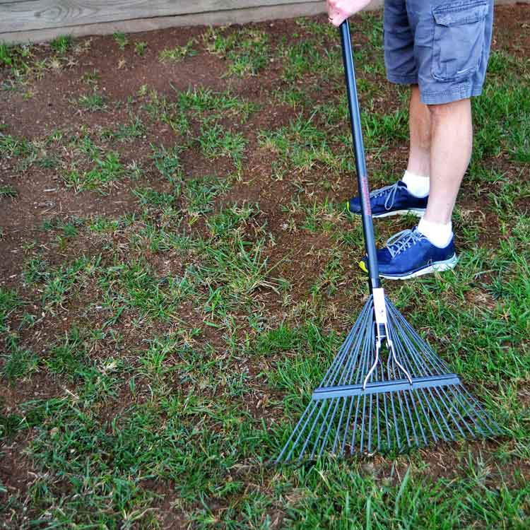 Loosen the soil within existing lawn with stiff-tined leaf or garden rake.
