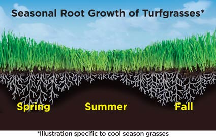 Seasonal grass root growth