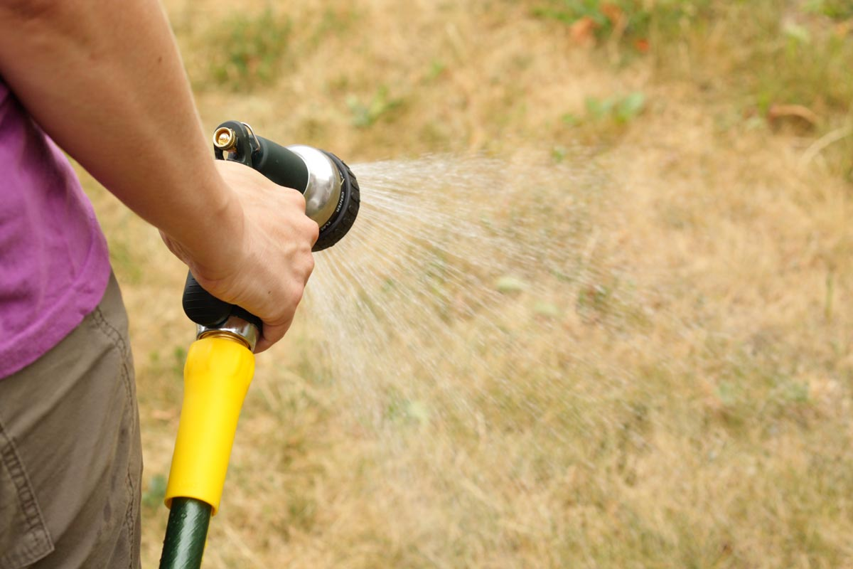 Watering brown lawn