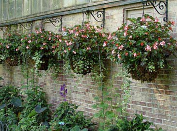 hanging baskets add eye-level color along a wall