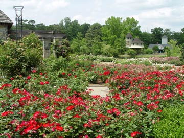Lewis Ginter Rose Garden