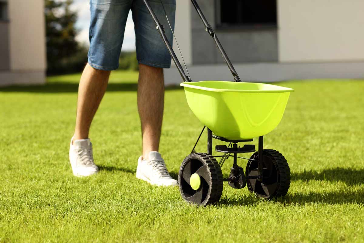 Applying lime to a lawn